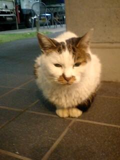 ノラ猫ふたたび